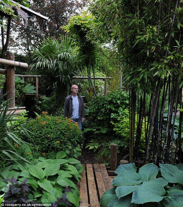 25 Best Ideas About Jungle Gardens On Pinterest Garden Oasis