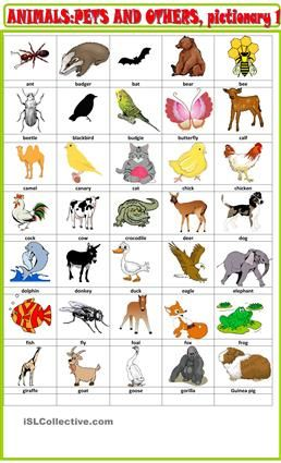 Very Cute Cartoon Wallpapers Animals And Pets Pictionary 1 Animals Pinterest