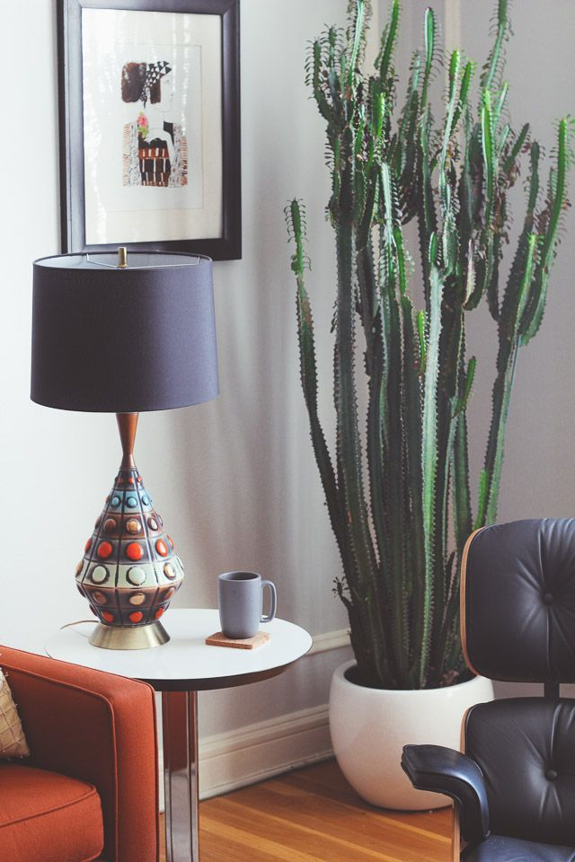 17 Best ideas about Indoor Cactus on Pinterest  Cactus