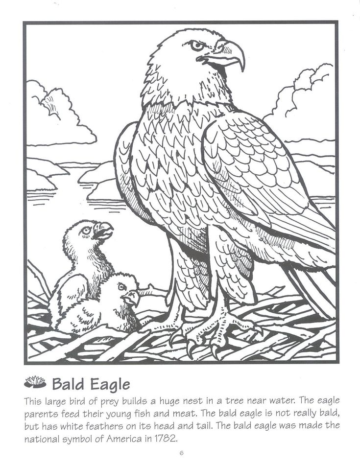 72 best images about Eagle Crafts / Activities for Kids on
