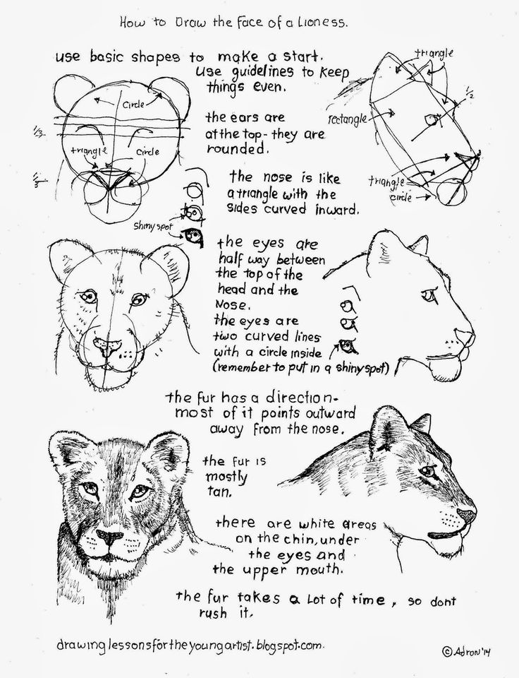 1000+ ideas about Easy Drawings Of Animals on Pinterest