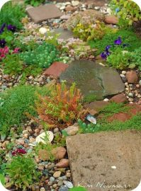 1000+ images about Rock Gardens & Ground Covers on ...