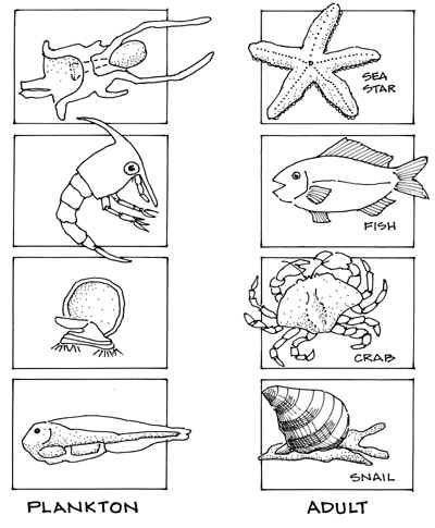 67 best images about Marine biology for kids on Pinterest