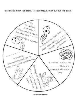 Life Cycle of a Frog Wheel freeLife Cycle, Frog Lifecycle