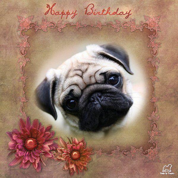 Pug Birthday Card PUG BIRTHDAY CARDS Pinterest