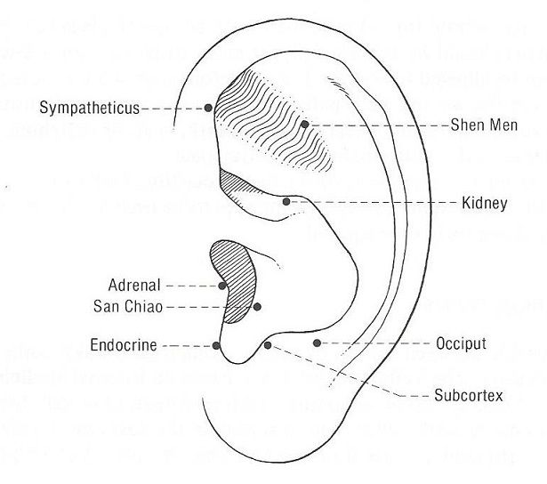 193 best images about AURICULAR ACUPUNCTURE on Pinterest