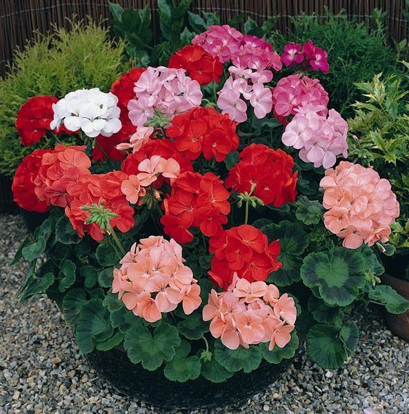 171 Best Images About Garden Design Ideas On Pinterest Garden
