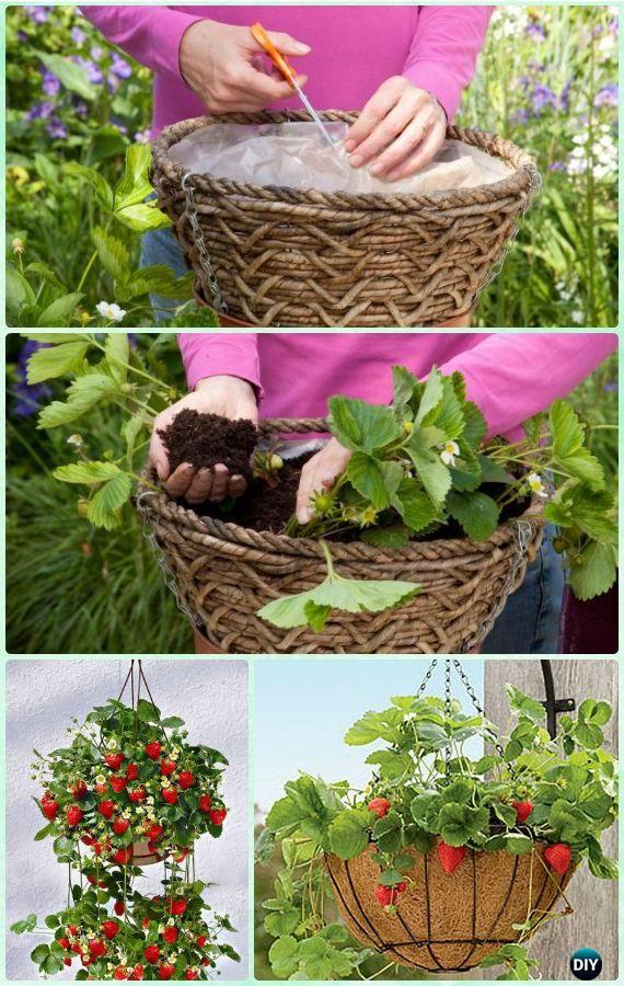 25 Best Ideas About Strawberries Garden On Pinterest Strawberry
