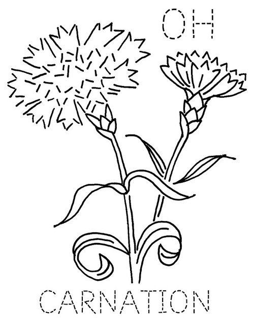 Ohio Carnation