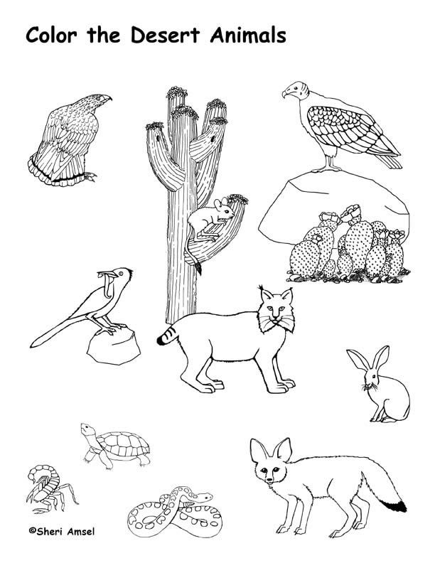 25+ best ideas about Desert animals and plants on