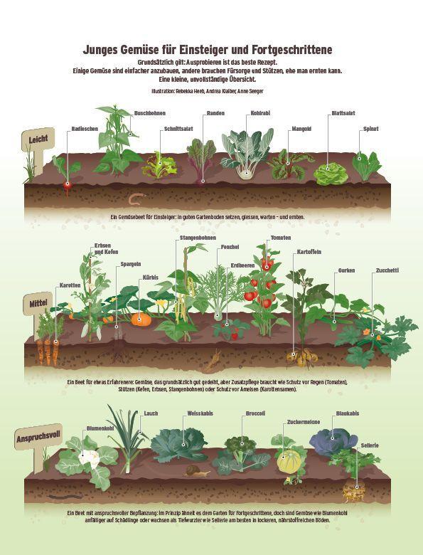 Die Besten 25 Bohnen Pflanzen Ideen Auf Pinterest Erbsen