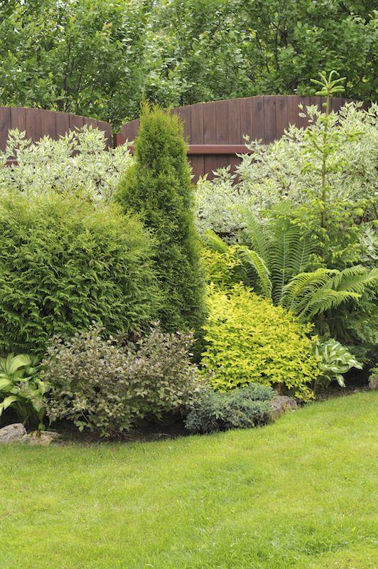 17 Best Ideas About Garden Shrubs On Pinterest Shade Shrubs