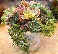 25+ best ideas about Succulent arrangements on Pinterest ...