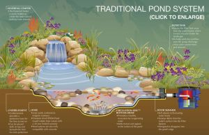 17 Best images about Fish Pond on Pinterest | Backyard