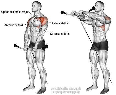 1000+ ideas about Shoulder Muscle Anatomy on Pinterest