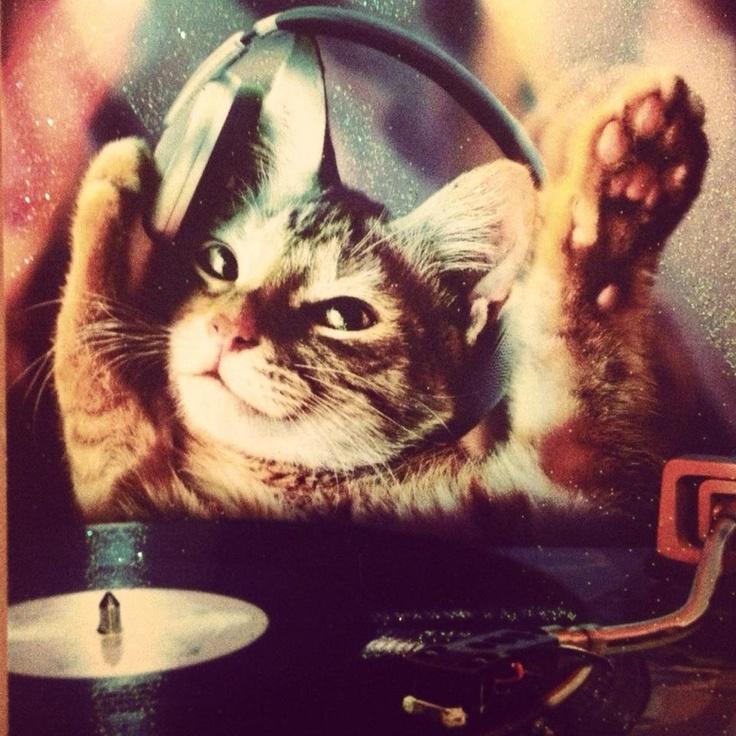 Cute Kitty Cat Wallpapers Cute Dj Kitty Ravers Edm M U S I C H O L I C S