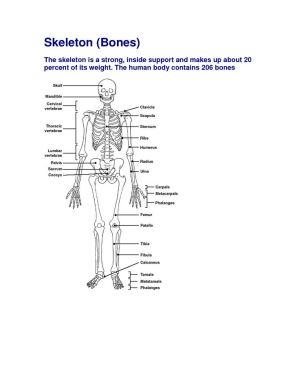 Free Diagrams Human Body | Human Body Bones Diagram  Serbagunamarine | The Human Body