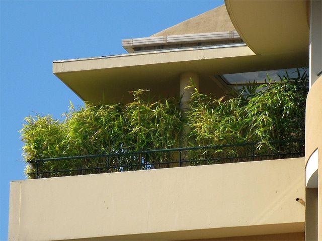 Bambus Im Kubel Kann Eine Terrasse Im Garten Oder Einen Balkon Mit Einem Lebendigen Sichtschutz Sehr