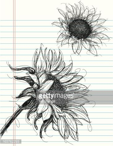 The 25+ best Sunflower drawing ideas on Pinterest
