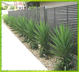 Best 25 Yucca Plant Ideas On Pinterest Desert Landscaping