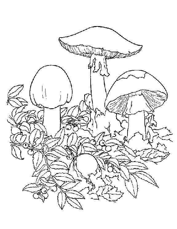 199 best images about Adult Colouring~Mushrooms