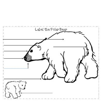 Informational writing, what do polar bears eat? graphic