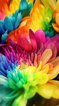 Bright Colorful Flowers Wallpaper