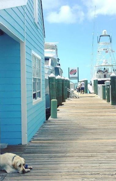 1000 Ideas About Harbour Island Bahamas On Pinterest