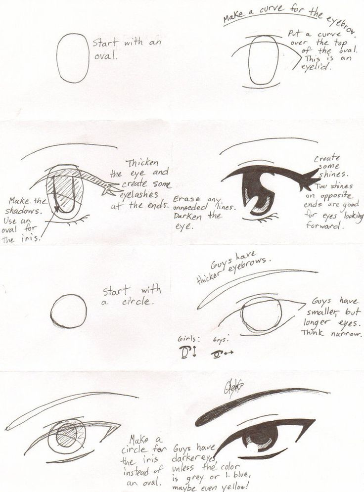 1000+ images about animaie easy step by step drawings on