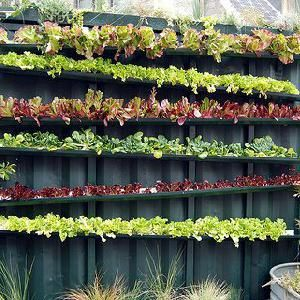 25 Best Ideas About Gutter Garden On Pinterest Strawberry