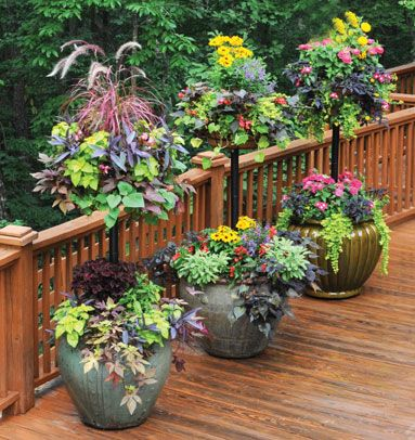 246 Best Images About Outdoors Potted Plants Flowers On
