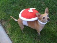 Koopa Super Mario Bros Nintendo Dog Costume by ...