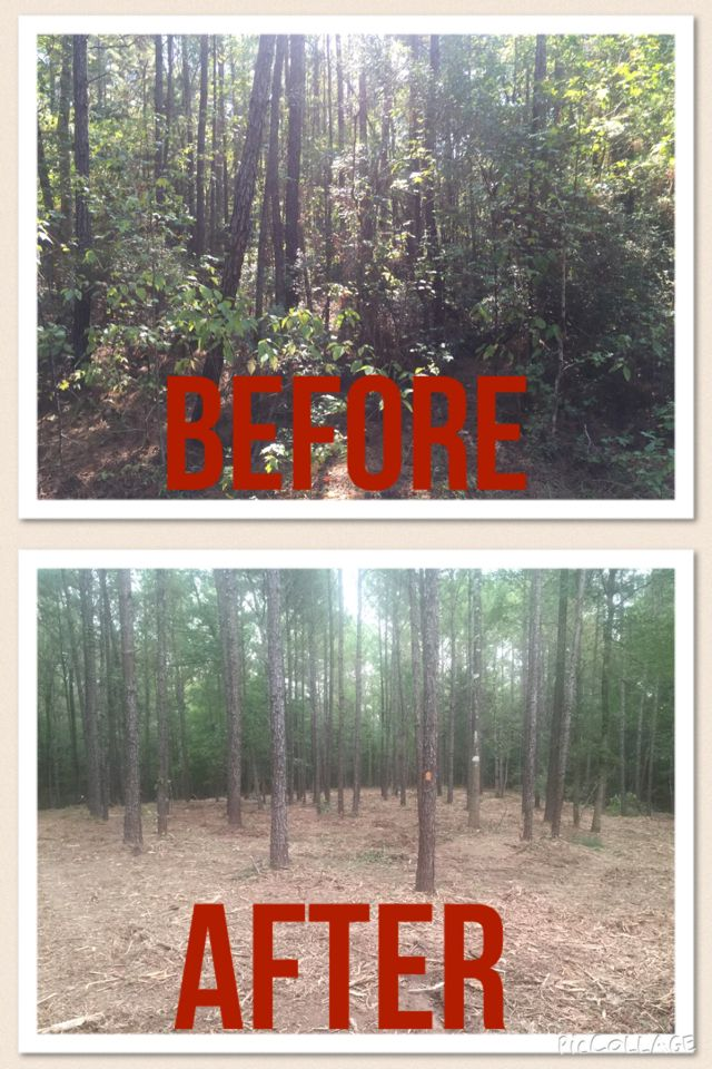 Hydro ax land clearing forestry mulching underbrushing