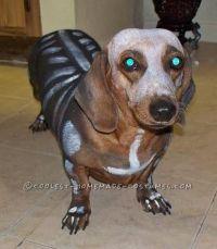 Creepy! #dachshund #halloween #costume   Pets   Pinterest ...