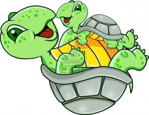 frogs fish turtles