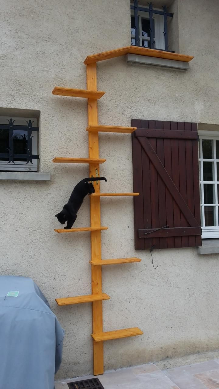 17 Best Ideas About Cat Stairs On Pinterest Cat Climbing