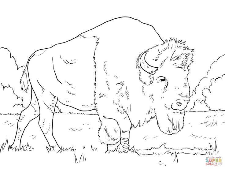 Bear Face Coloring Page How To Draw A Grizzly Pages