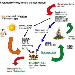 Photosynthesis Process Diagram For 5th Grade Wiring Telephone Master Socket Cellular Respiration Worksheet | And ... Biology Stuff Pinterest
