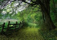 106 best images about grass green on Pinterest | Tracy ...