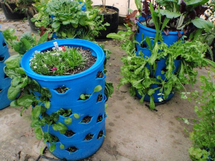 107 Best Images About Urban Gardening Ideas On Pinterest Urban