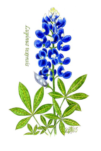 17 Best ideas about Bluebonnet Tattoo on Pinterest
