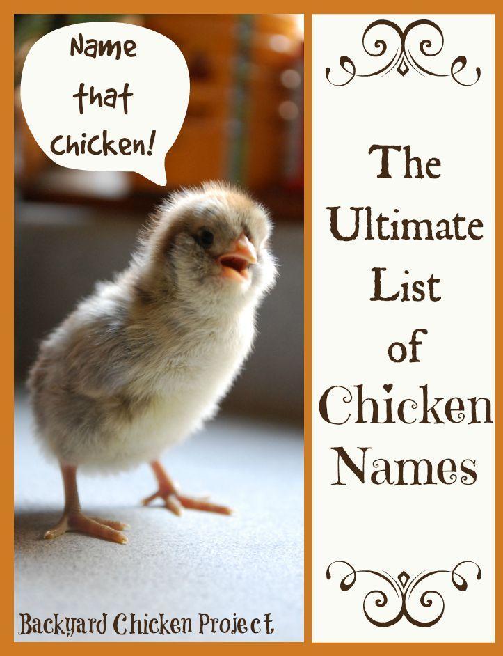25+ bästa Baby Chicks idéerna på Pinterest | Föda upp höns ...
