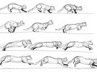 118 best Animal Drawing References images on Pinterest