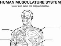 18 best images about school|anatomy|muscular system on
