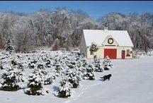 Yankee Barn Homes Barnhomes On Pinterest