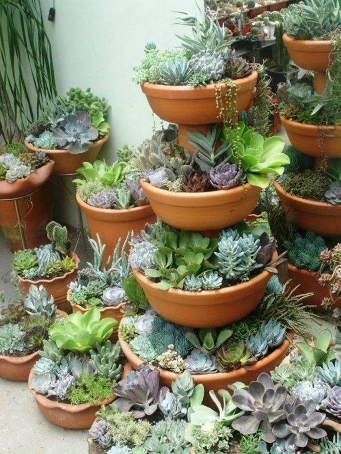 Cactus And Succulents Container Gardening Designs With Outdoor