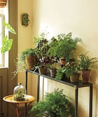 small plants decoration for small space | Family Room ...