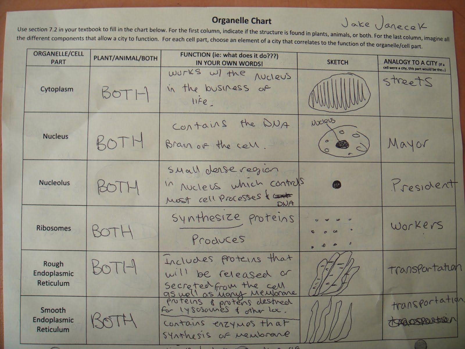 Cells Worksheets