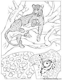39 gepard zum ausmalen - besten bilder von ausmalbilder