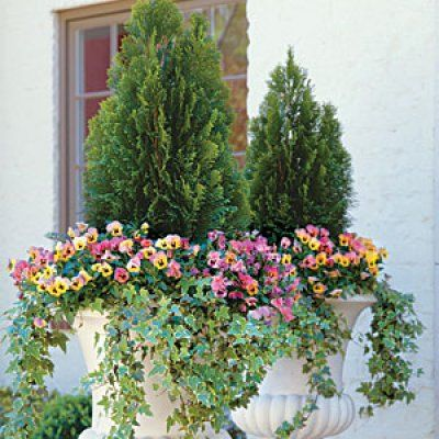 Best Ideas For Fall Container Gardening The Winter Container